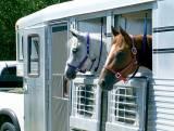 Horse_Stable_Insurance_Online.jpg