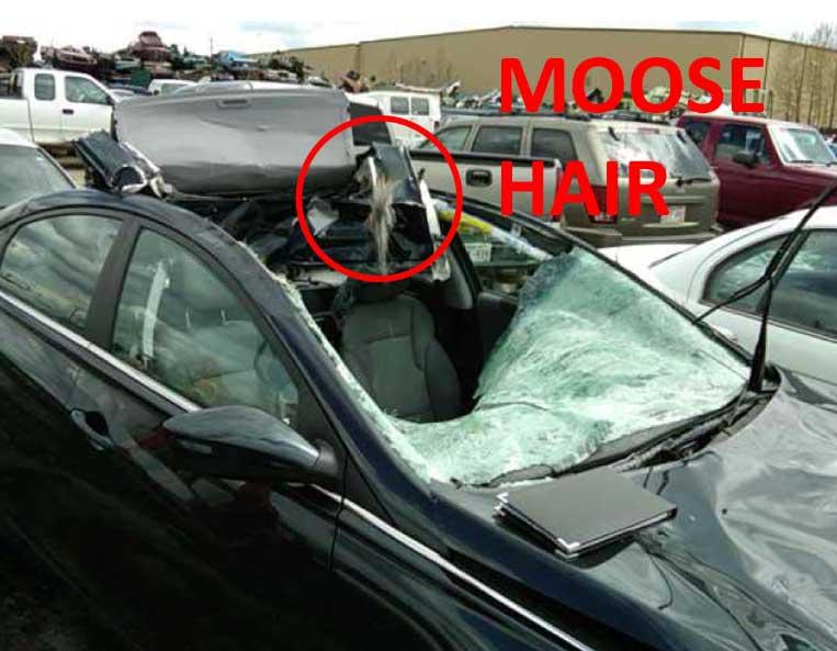 Please Don't Feed The Deer-mooseencounter-jpg